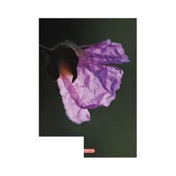 Тетрадь общая Attache (A5, 80л, клетка, 60шт/уп)